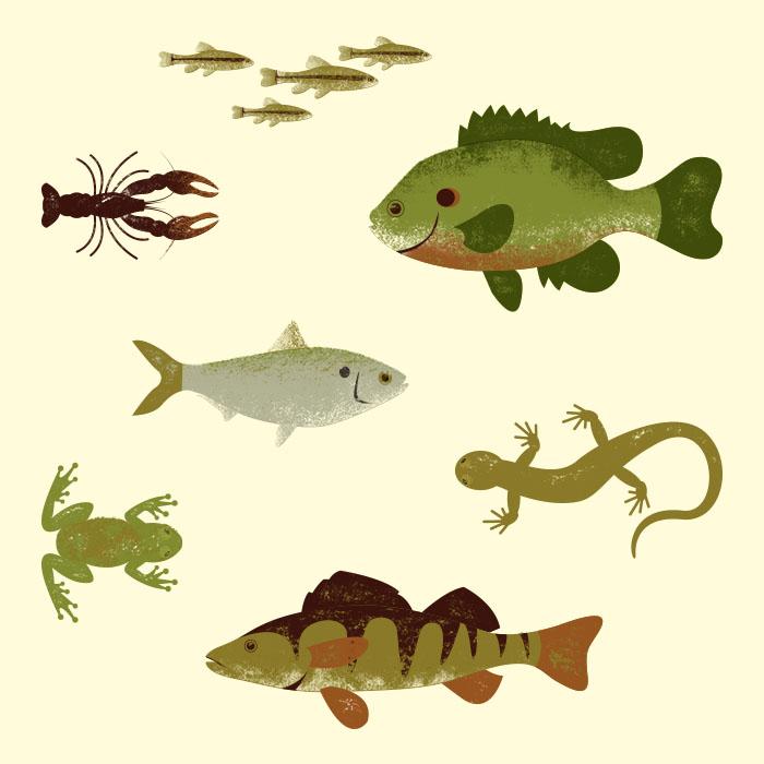 black bass diet prey